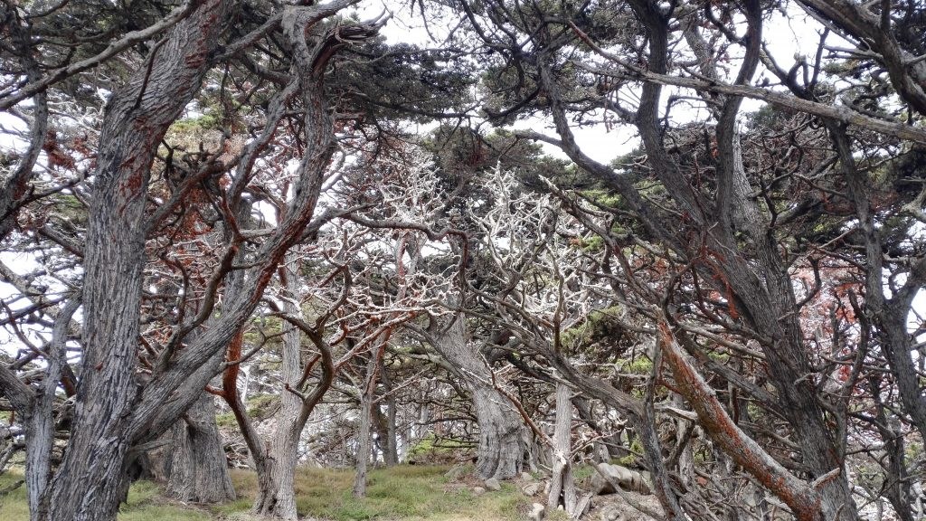 arbres point lobos california