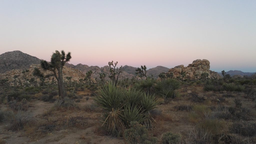 sunrise at joshua tree np usa